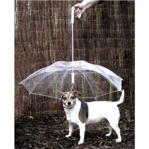 зонтик для любимой собачки