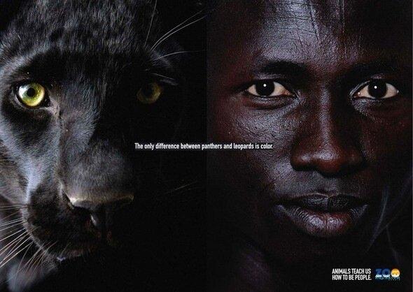 madrid zoo promo