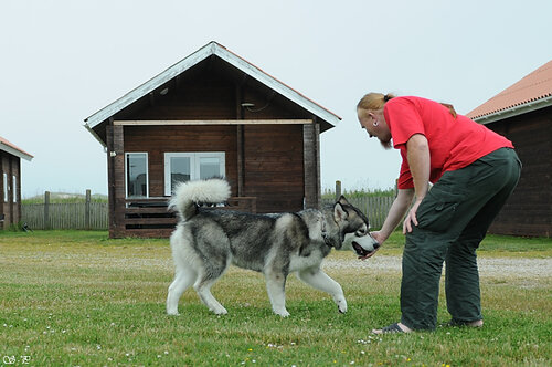 http://img-fotki.yandex.ru/get/5101/malamute-akbar.38/0_29115_f640f456_L.jpg