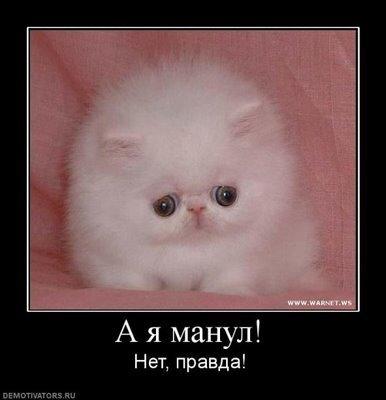 Пятничные коты