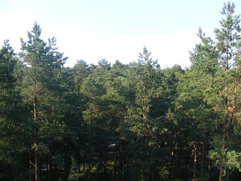http://img-fotki.yandex.ru/get/5101/ungehindert.4/0_55793_1760a194_XL