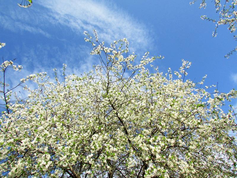 Изображение 1660 вариант вишни.jpg