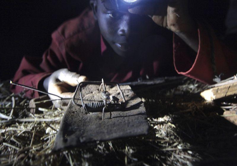 10 мышей за доллар Зимбабве