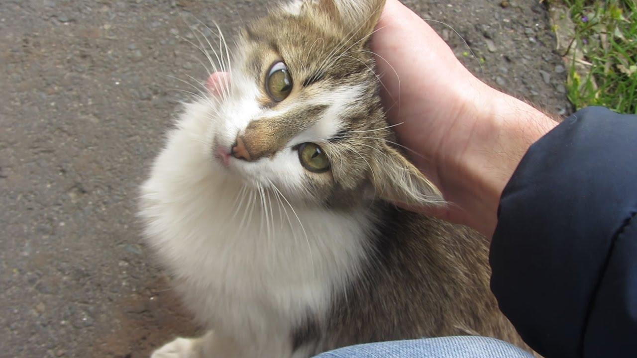 кошку подобрали на улице
