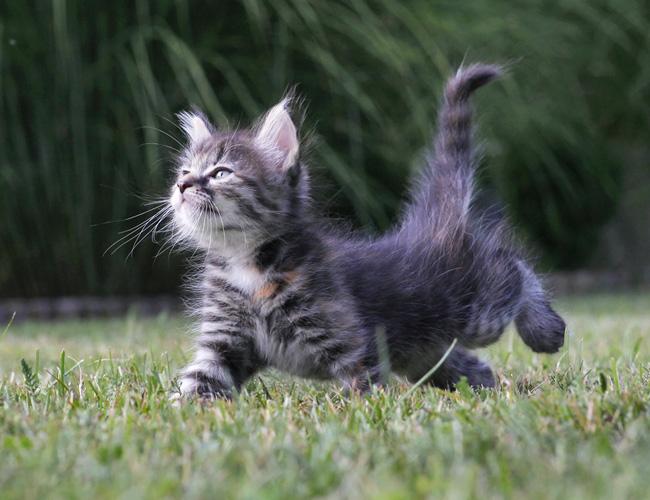 25 доказательств того, насколько коты многогранны и талантливы