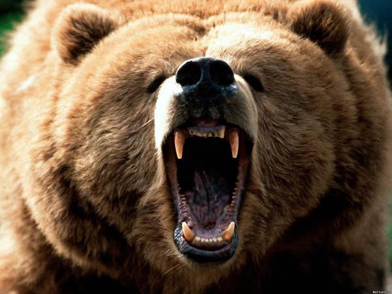 5. Медведь   Добрый плюшевый мишка, которого ты некогда так любил кормить кашкой из ложки, так