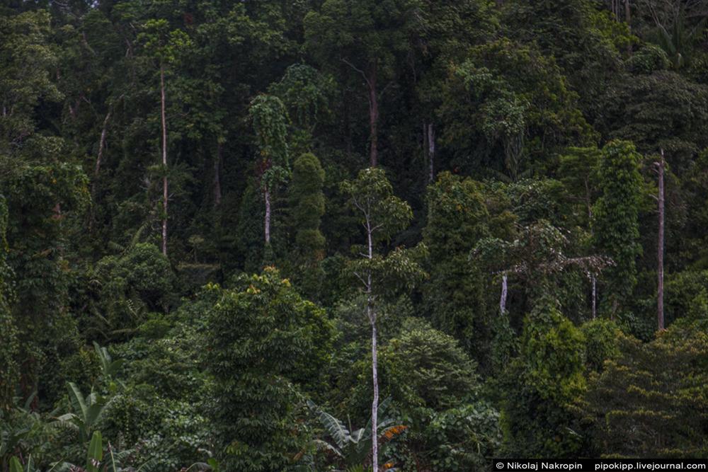 Второе путешествие в племя Файу. Путь из захолустья в глубокие джунгли. Набире, снова, пастор, чтобы, лучше, самолётик, когда, После, лихорадка, бусики, папуас, сообщил, спросил, Питер, Новой, топоры, Филадельфия, долларов, джунглях, Коловаи