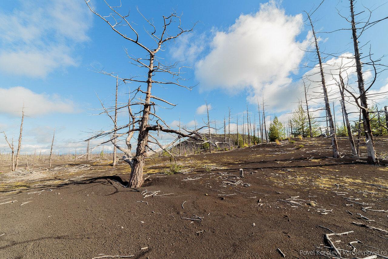 Kamchatka-150.jpg