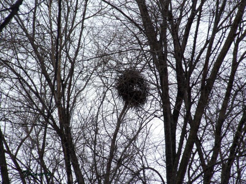 гнездо-8.jpg