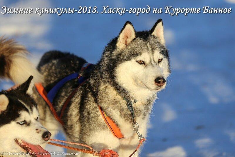 Зимние каникулы-2018. Хаски-город на Курорте Банное.jpg