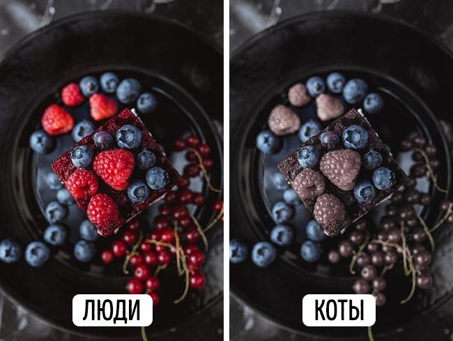 © pixabay     Коты различают достаточно много цветов для того, чтобы ихжизнь была вполне