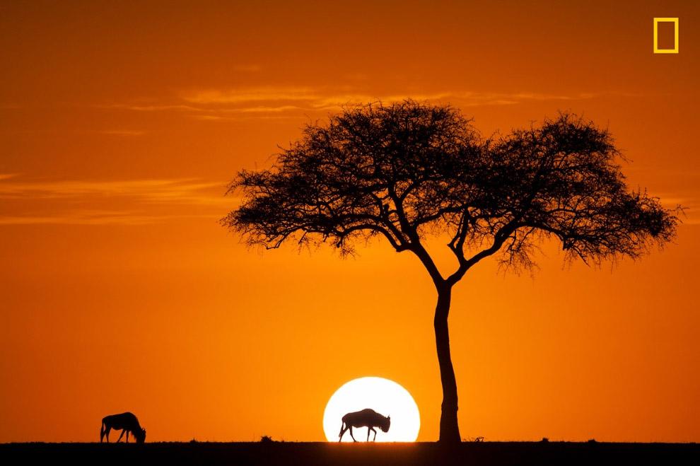 15. Спрятался. Рыбки-клоуны. (Фото Marc Hornig | National Geographic Nature Photographer of the Year