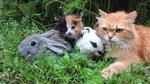 Раз, Два, Три, Четыре, Пять или Найдите Рыжего котёнка