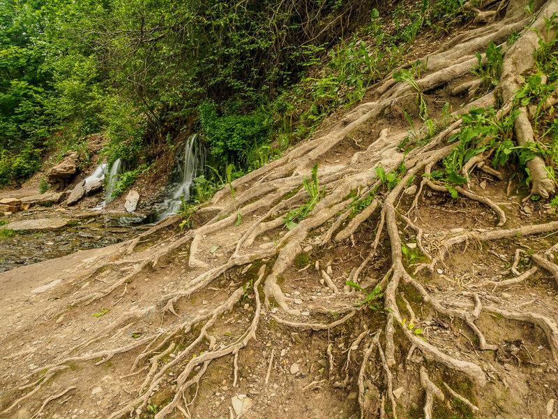 Протекая мимо мощных корней