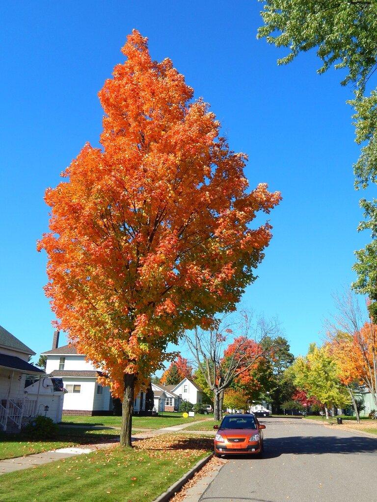 Осень в городе.