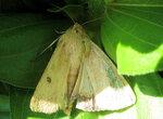 Бабочка 5.jpg
