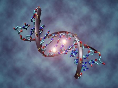 МВД России выступило с предложением брать образцы ДНК у всех нарушителей —Русская планета