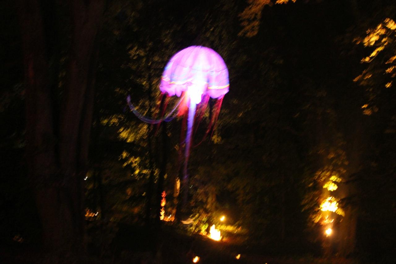 Ночная медуза