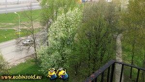 середина мая