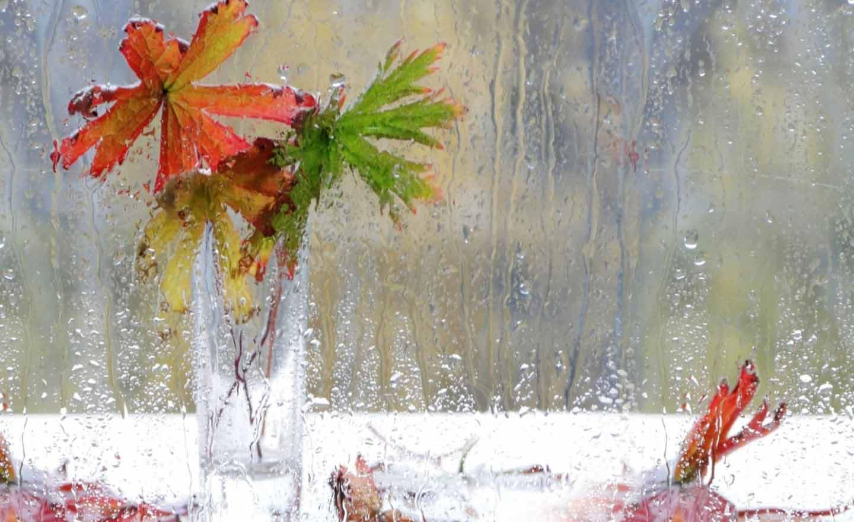 Осенние капли