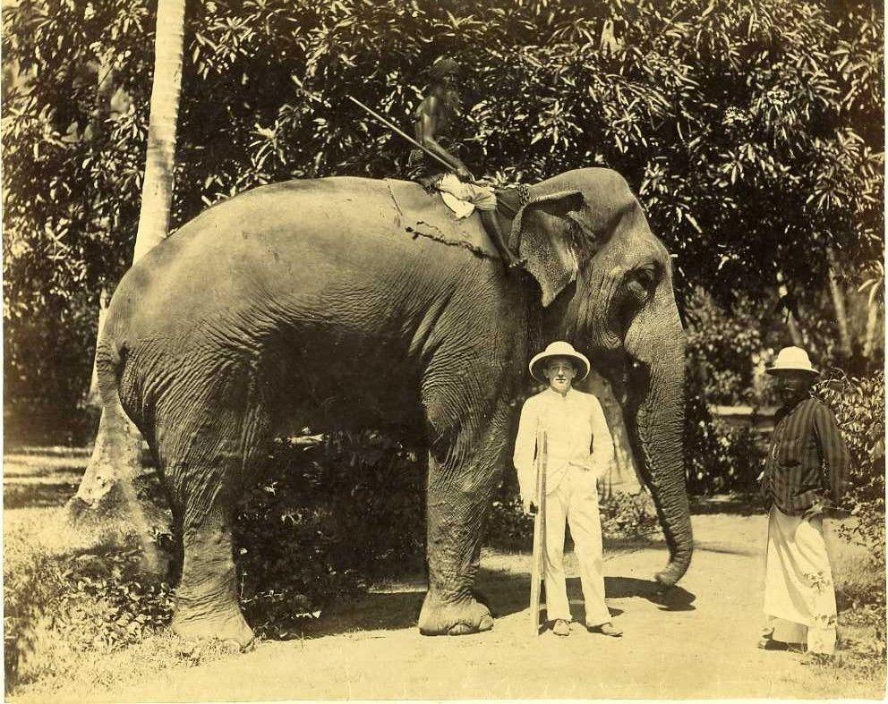 Коломбо. Слон