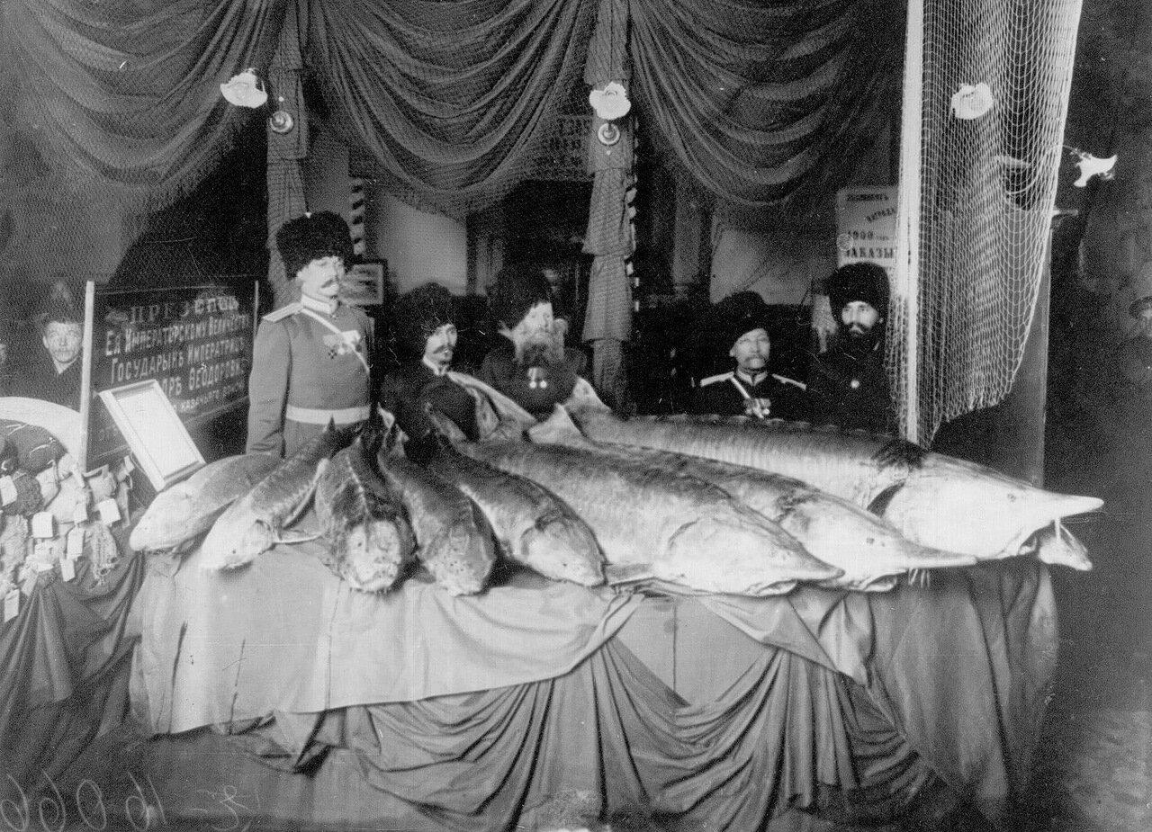 08.Белорыбица, присланная в подарок императрице Александре Федоровне от уральского казачьего войска, экспонированная на выставке