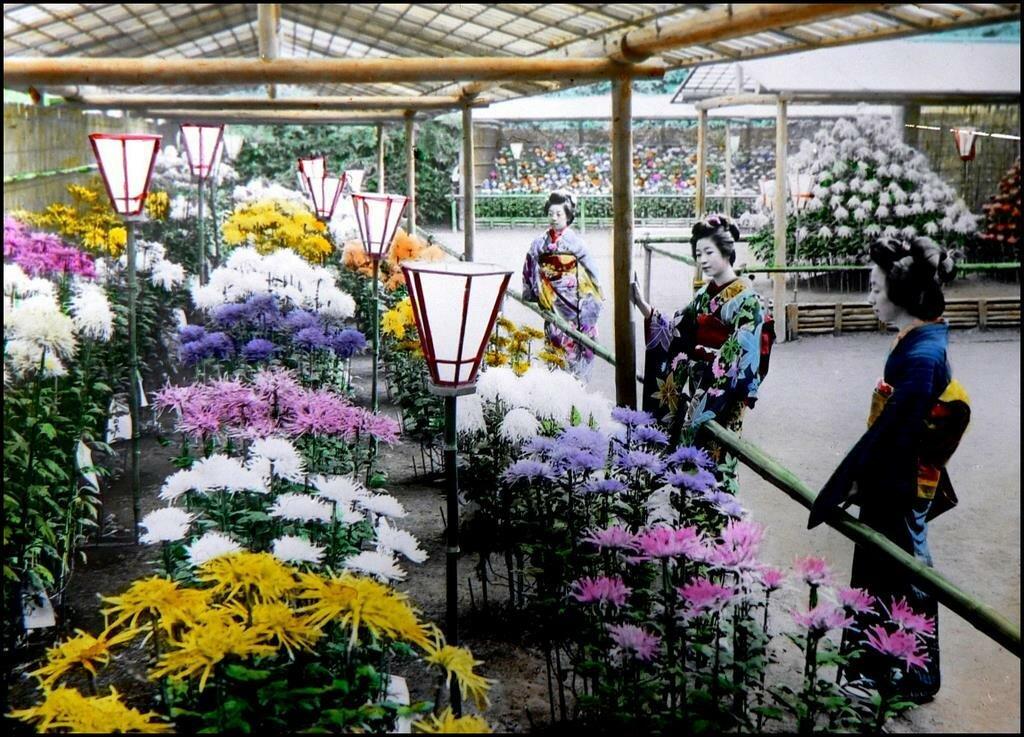 Иокогама. Гейши любуются цветами