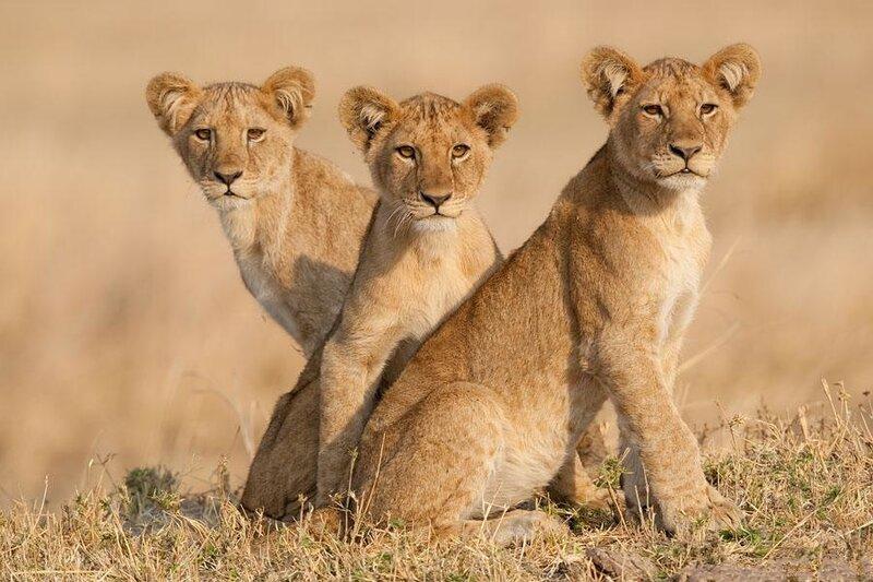 Южная Африка, животный мир