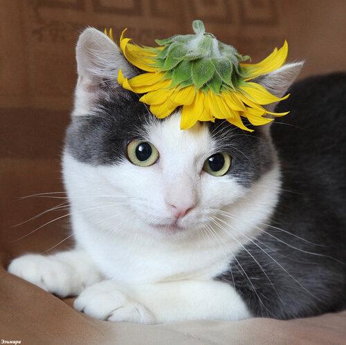Цветочная шляпа-последний писк сезона :-))
