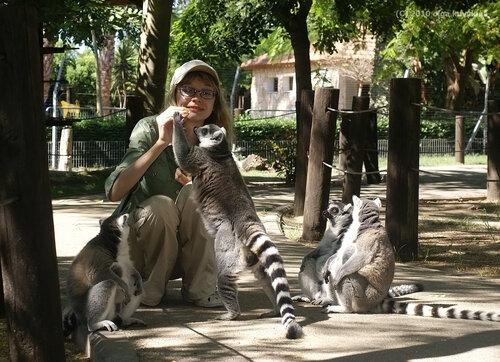 Общение с кошачьими лемурами в Хай-парке города Кирьят Моцкин