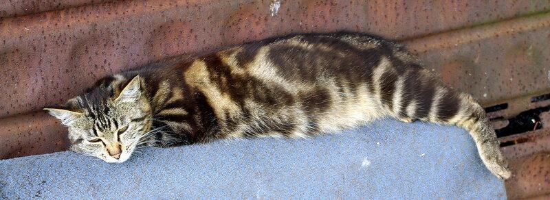 котик лежит.jpg