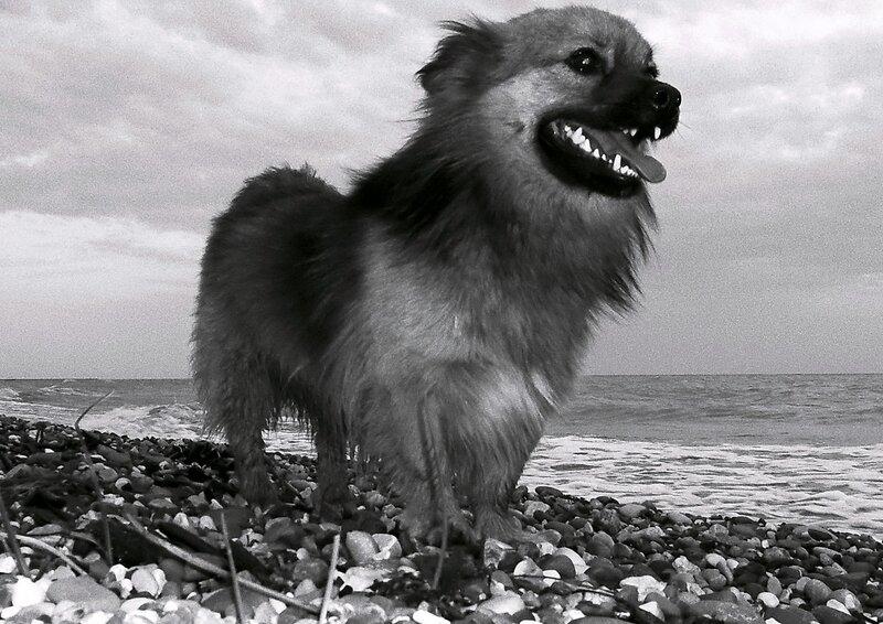Пёс и море...