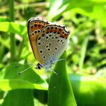 Бабочка 3.jpg