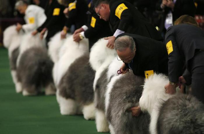 Бигль по кличке Мисс Пи стала лучшей собакой США