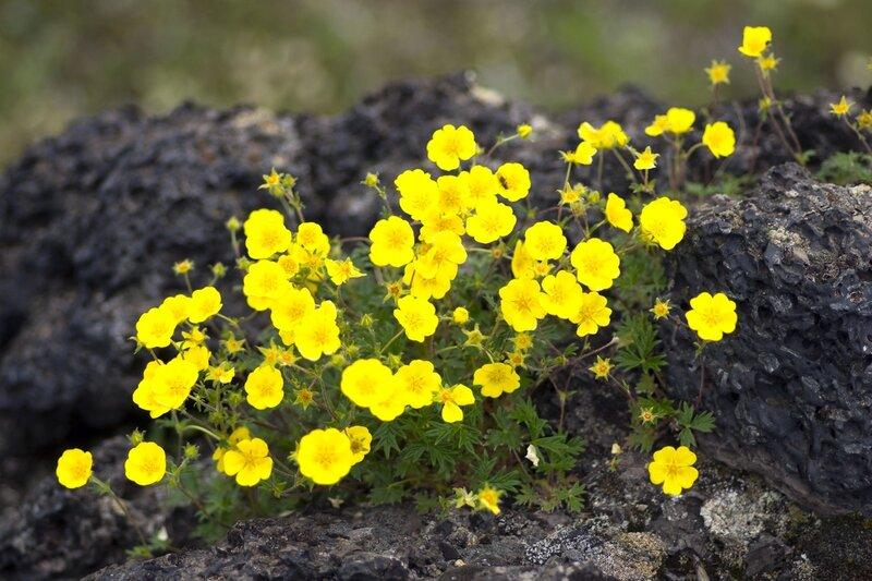 IMGP7420_жёлтые цветы.jpg