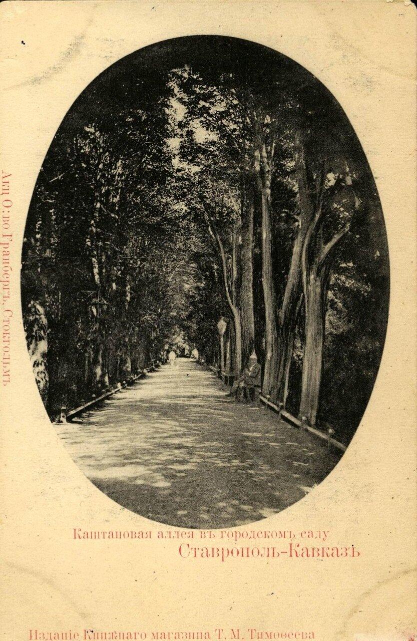 Каштановая аллея в городском саду