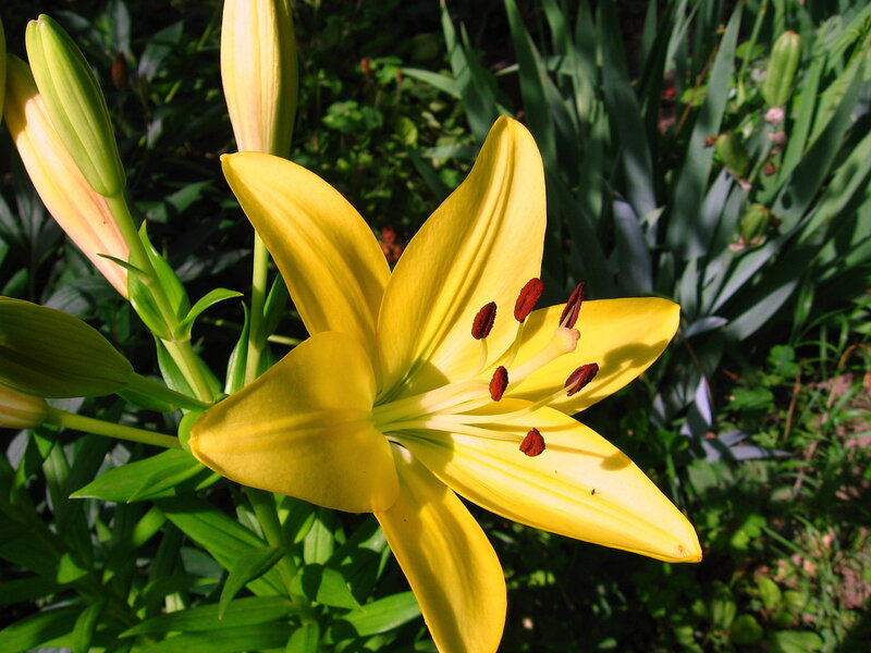 растеряться фото лилии тидви вот, плавно подходим