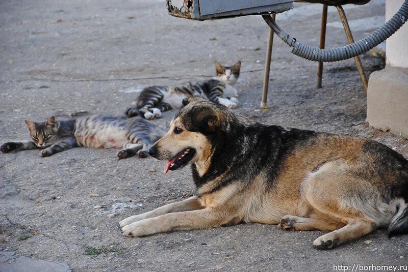 собака и кошки