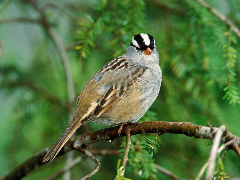 Волшебные птицы (45 отличных фото на рабочий стол) 0 312ba c7446608 XL