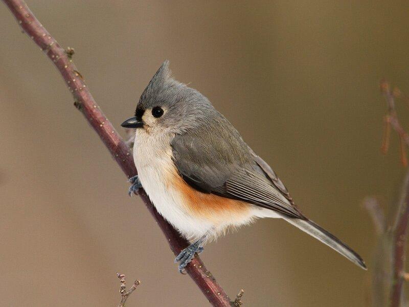Волшебные птицы (45 отличных фото на рабочий стол) 0 312d4 56380422 XL