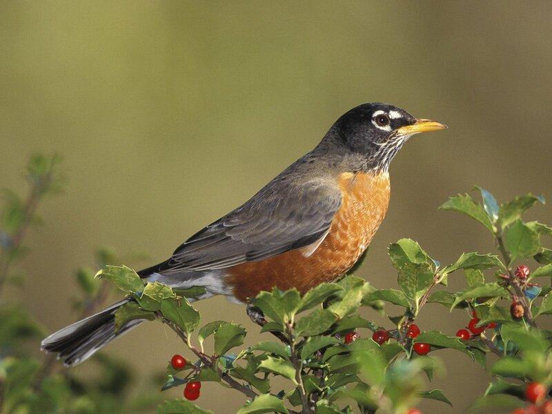 Волшебные птицы (45 отличных фото на рабочий стол) 0 312d7 c0439811 XL