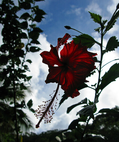 Цветы 0_3b30d_3071b1ce_L