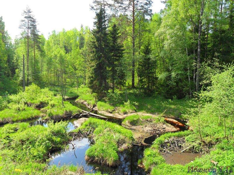 В майском лесу.