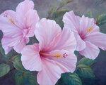 Pink-Hibiscus.jpg