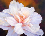 Whispering-Hibiscus.jpg