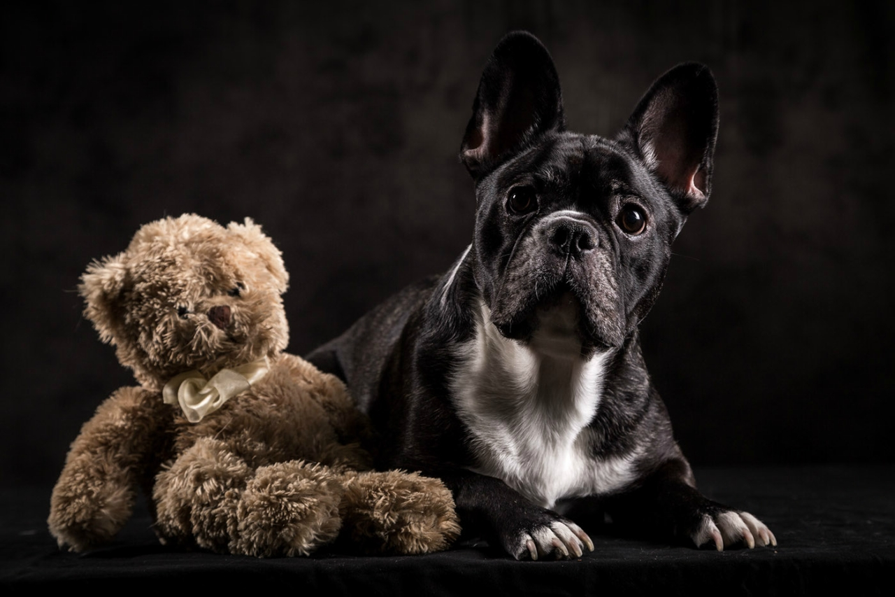 Животные из приюта / фото Raf Olaerts