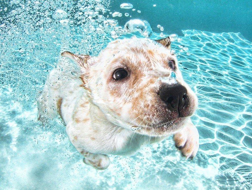 Подводные щенки в проекте фотографа Сета Кастила (5 фото)