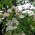 Зазываем весну
