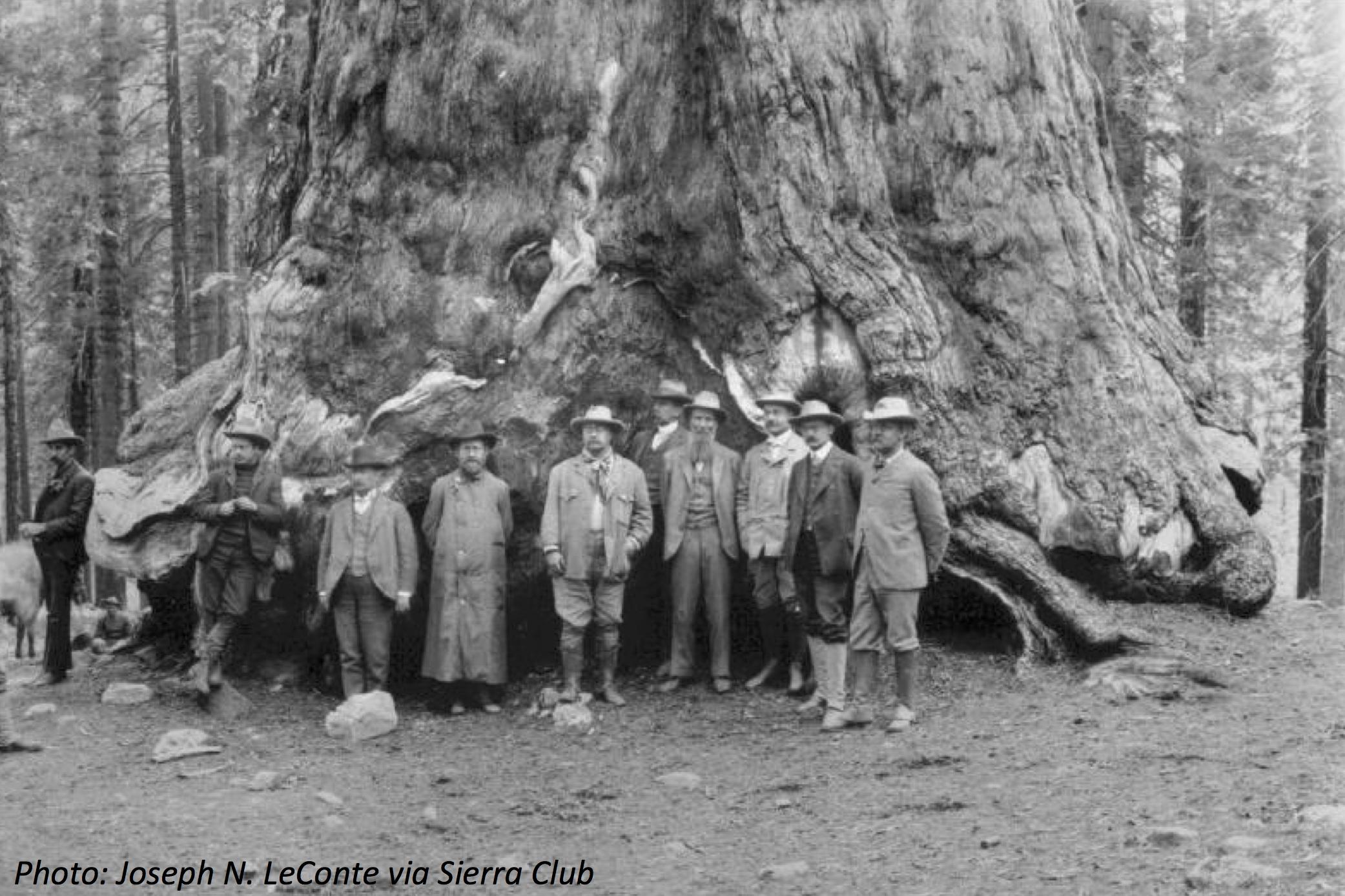 1903. Президент Тедди Рузвельт возле «Великого Гризли» в Большой роще Марипоса