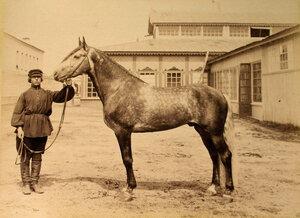 Рысистая лошадь завода Подаруева - один из экспонатов выставки.